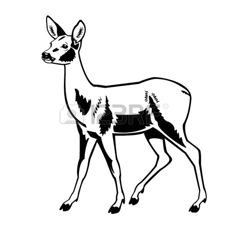 450x450 Roe Deer ,side View Picture Isolated On White Background,full
