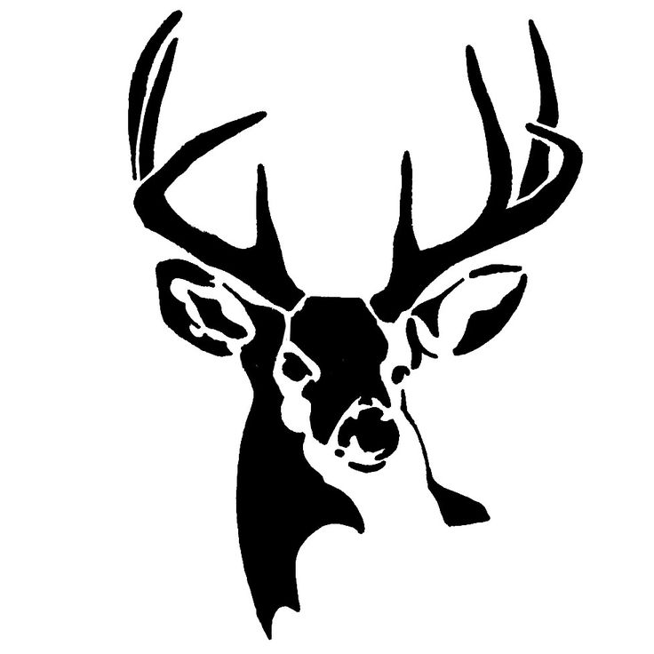 736x736 Best Buck Deer Ideas Deer, Big Deer And Male Deer