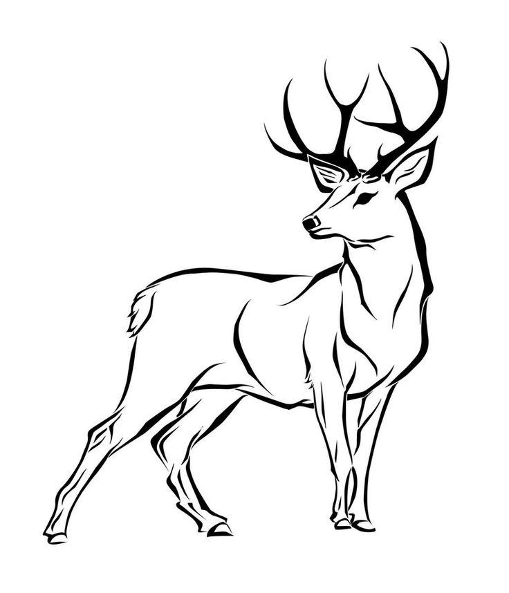 736x858 Drawn Buck Red Deer