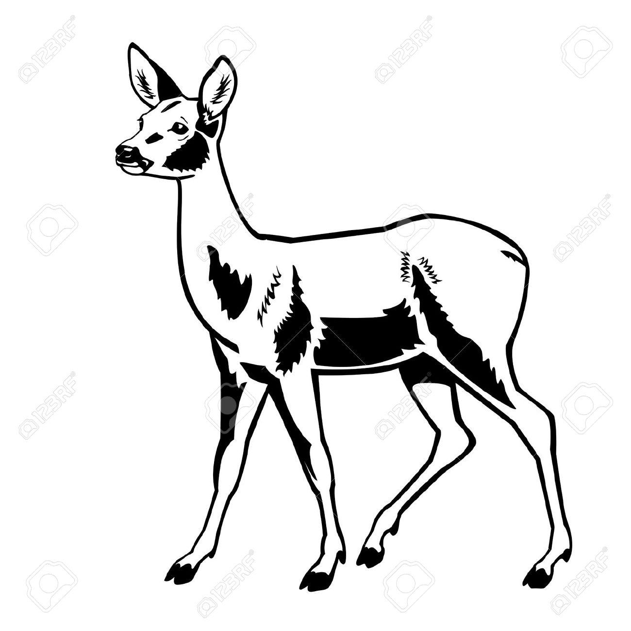 1300x1300 Roe Deer Clipart