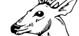 272x125 Deer Skull Clipart Clipart Panda