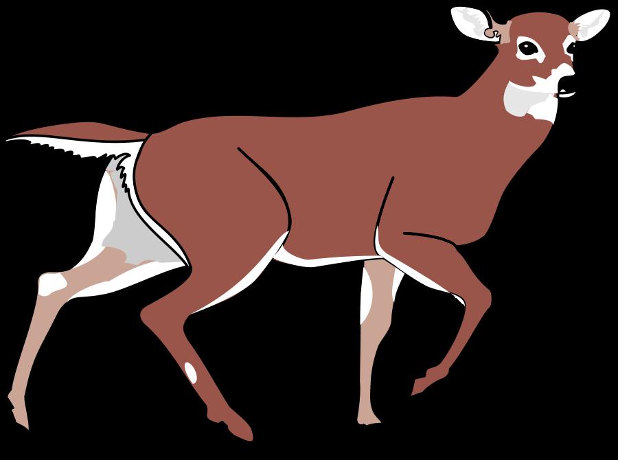 900x670 Deer Clip Art Free Clipart Images