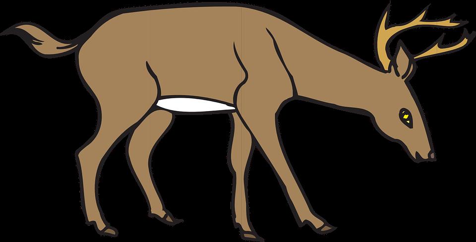 960x488 Deer Clipart Wild
