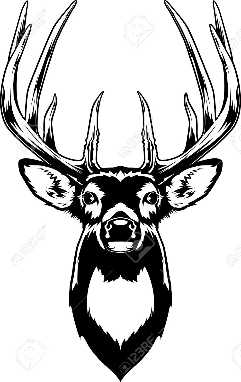 821x1300 White Tailed Deer Clipart Deer Head