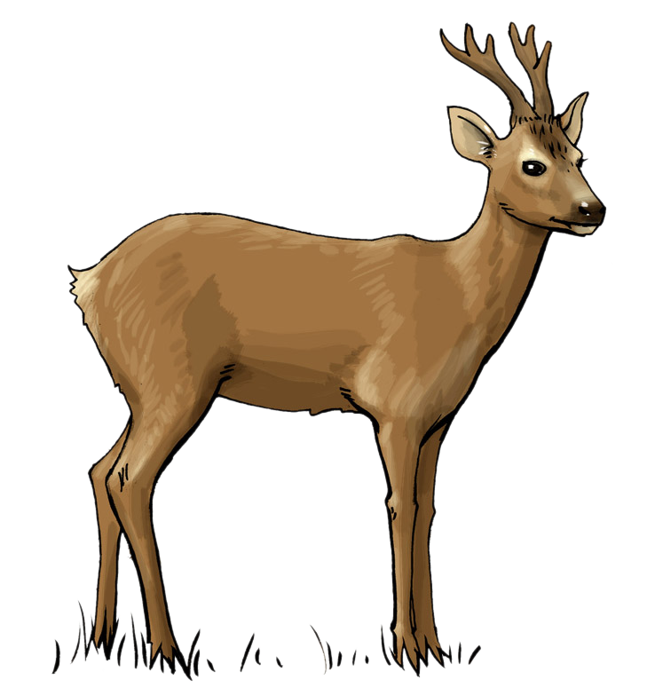 738x784 Free Deer Clip Art