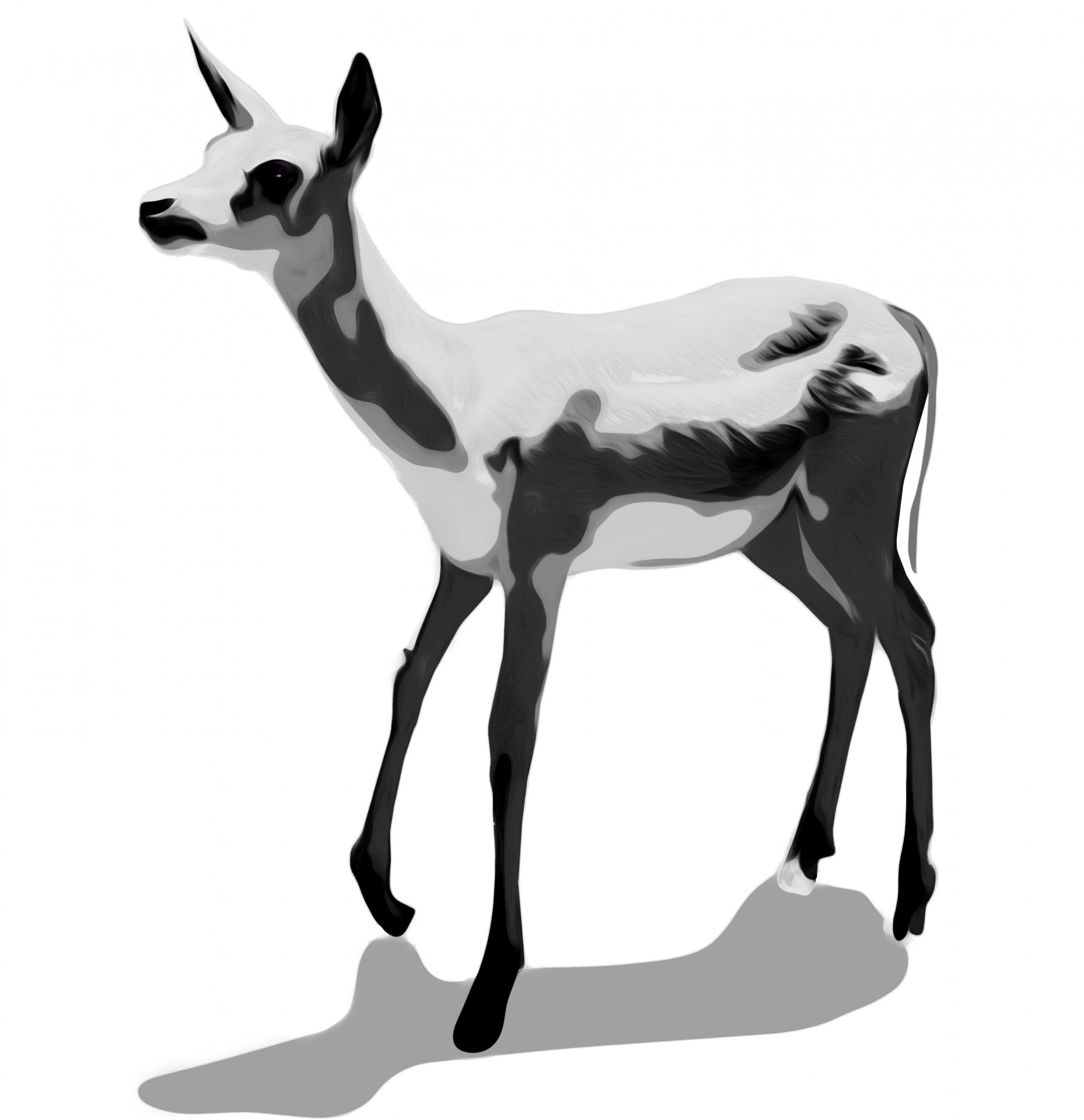 1858x1920 Clip Art Deer Free Stock Photo