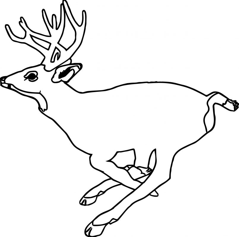 805x798 Coloring Pages Animals Realistic Zoo Galloping Deer Runned