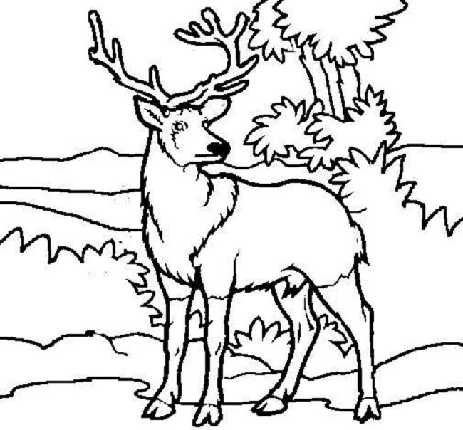 650x604 Deer Color Pages Projects To Try Free Printable
