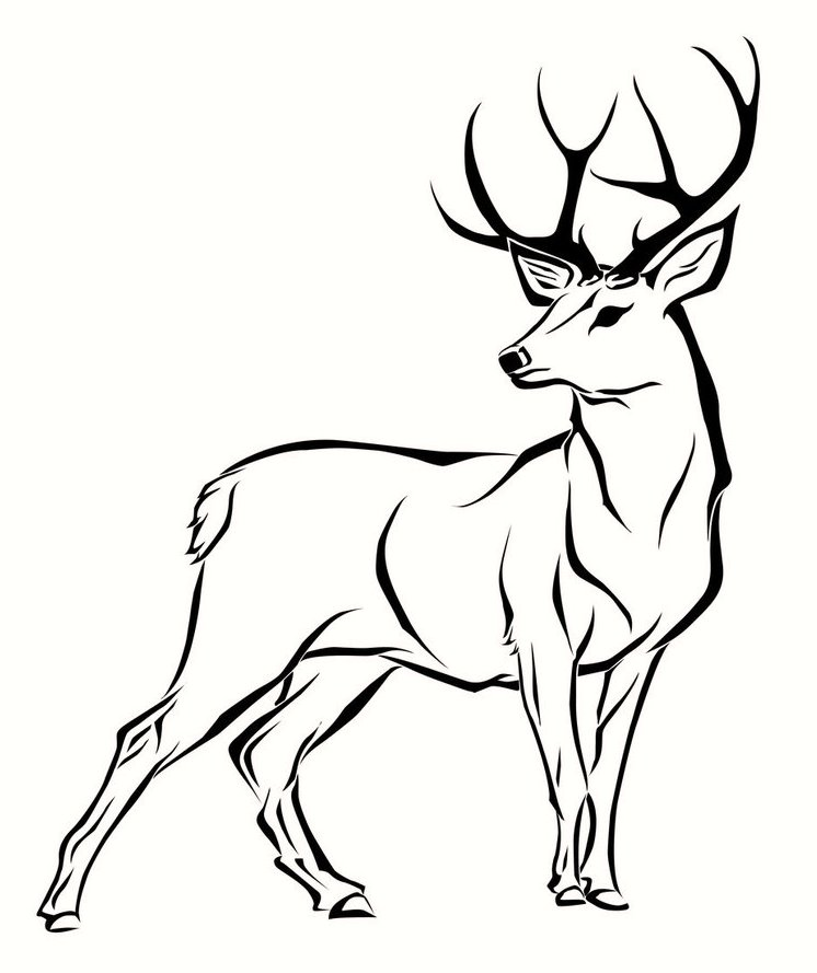 746x889 Deer Coloring Pages For Your Little Ones