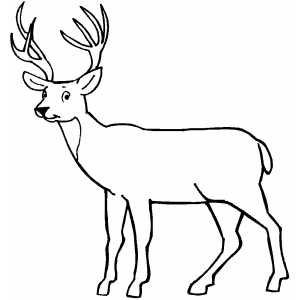 Deer Coloring Pages | Free download best Deer Coloring ...