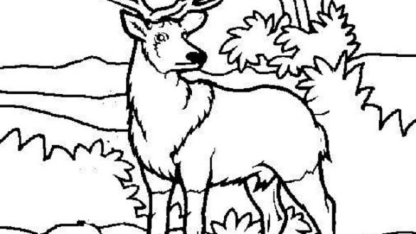 585x329 Baby Animals Online Coloring Pages Page 1 Places To Visit Of Deer