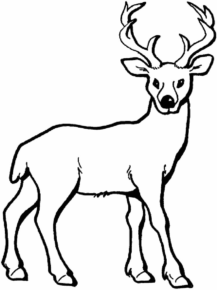 750x1000 Deer Coloring Pages. Download And Print Deer Coloring Pages