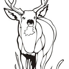 268x268 Key Deer Coloring Page Kids Drawing And Coloring Pages