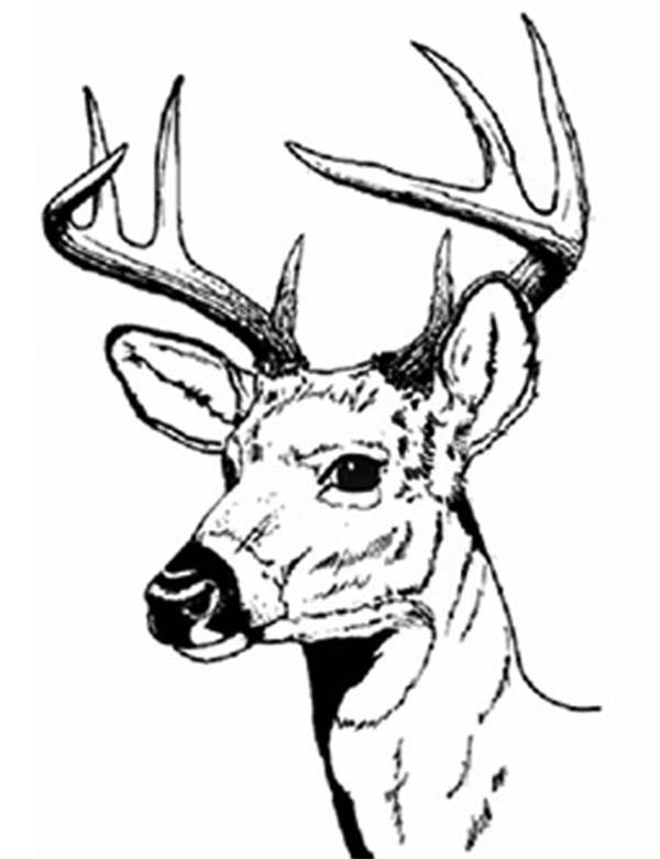 600x781 Male Deer With Sharp Hartshorn Coloring Page Coloring Sun