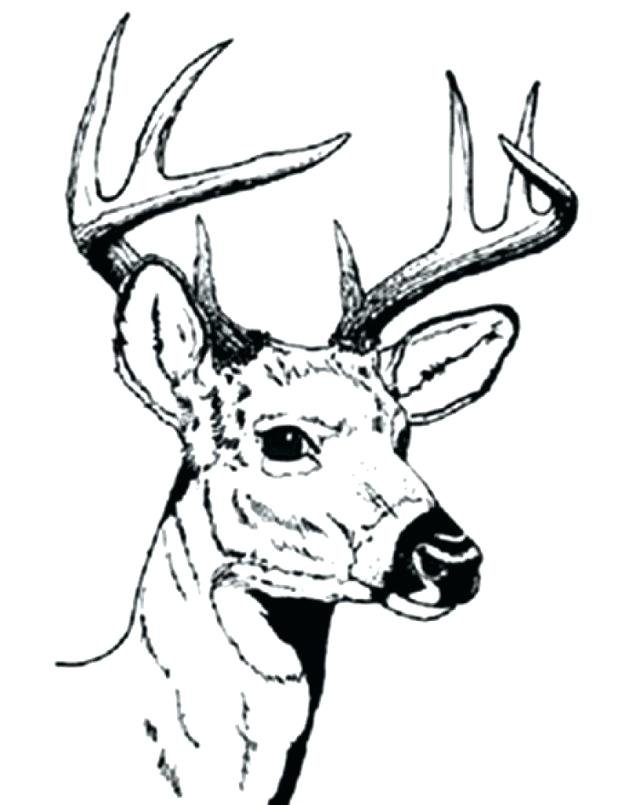 618x805 Deer Coloring Pages