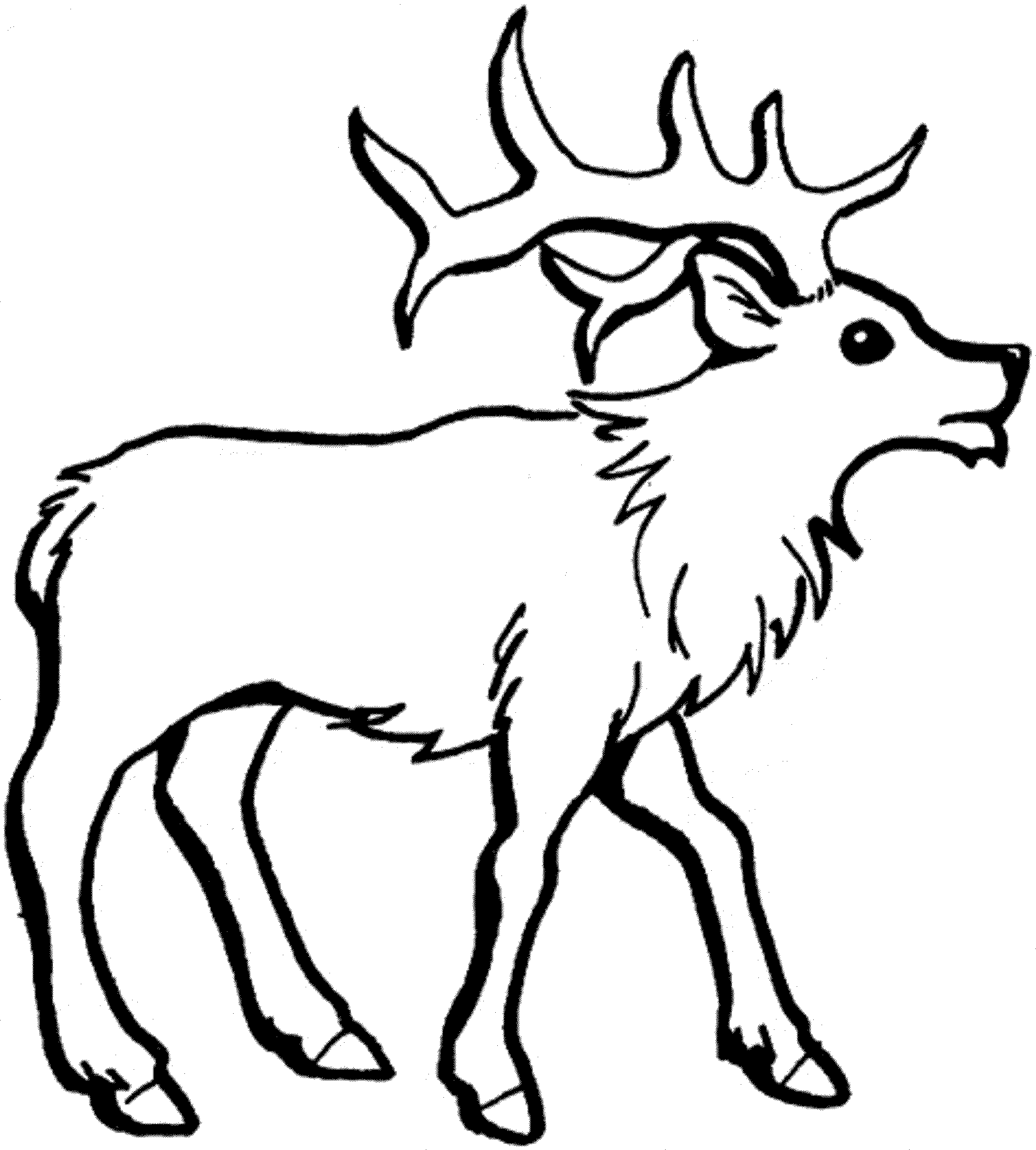 2000x2220 Extraordinary Baby Reindeer Coloring Pages Printable With Reindeer