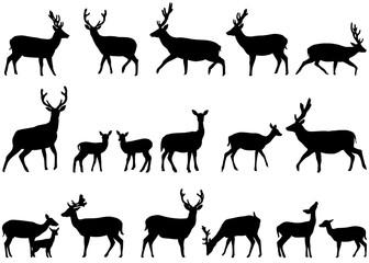 336x240 Search Photos Category Animals Gt Mammals Gt Deer