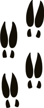 143x347 Deer Tracks Outline Clipart