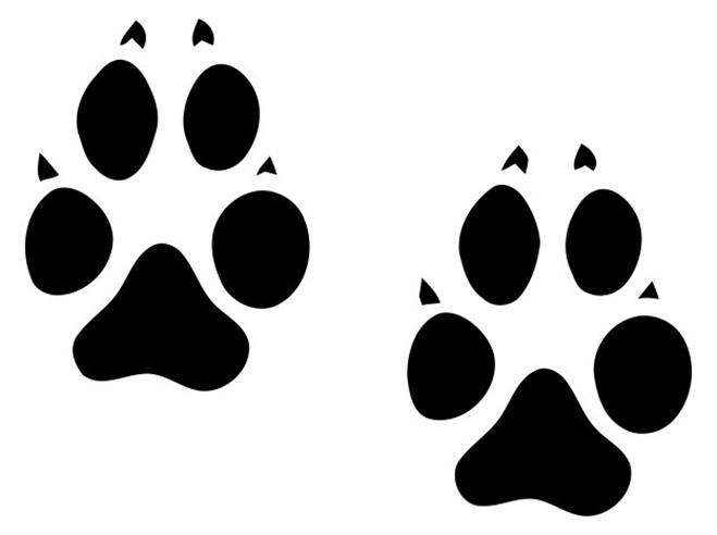 659x492 Animal Track Clipart