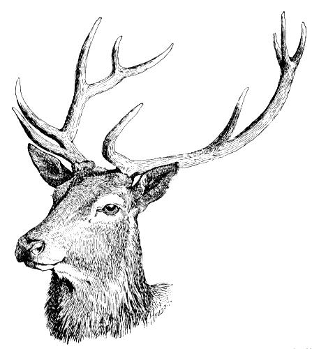 447x500 Deer 2 Clip Art Download