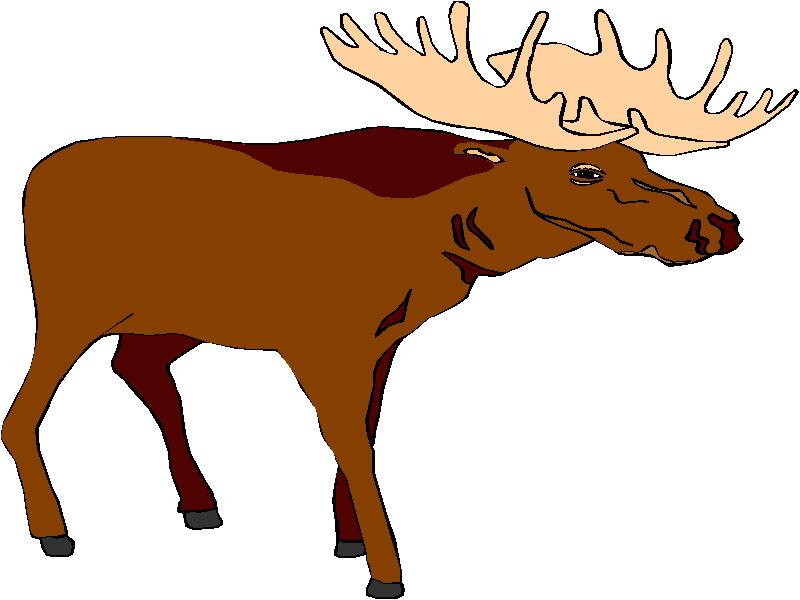 800x600 Deer Hunting Clipart