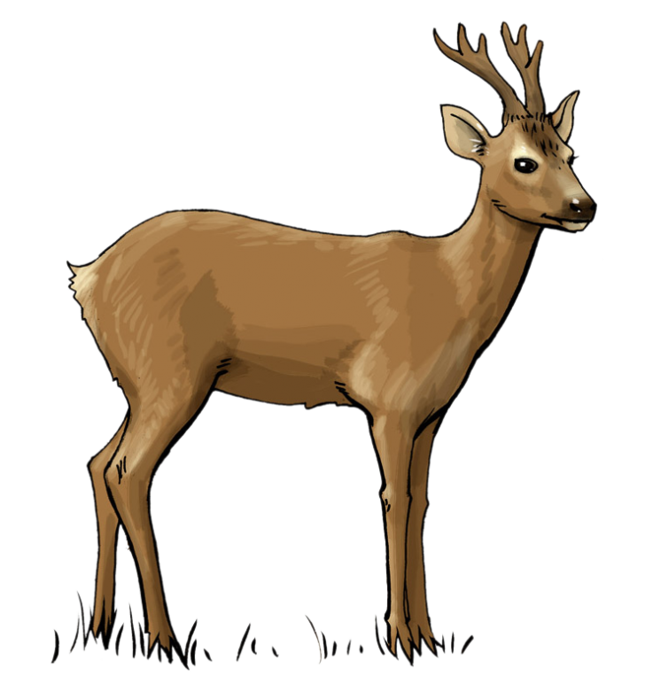 728x773 Woodland Deer Clipart Archives