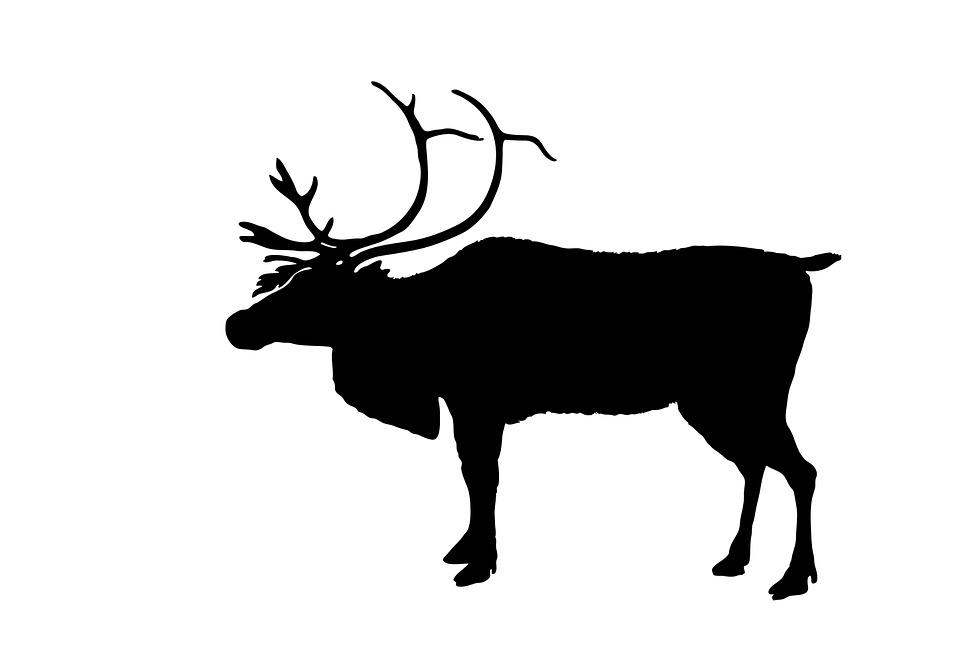 960x648 Free Photo Silhouette Animal Christmas Reindeer Deer Black