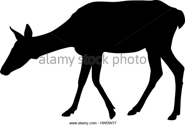 640x436 Roe Deer Black And White Stock Photos Amp Images