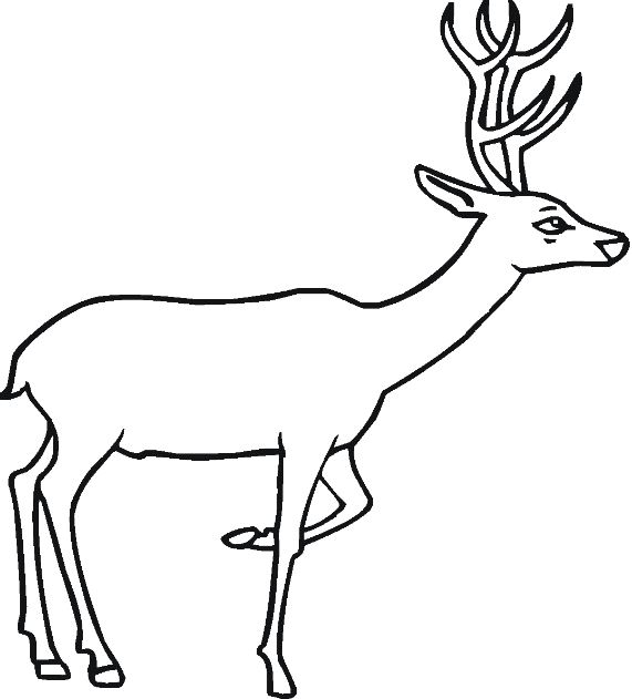 571x631 Top Deer Clipart Images Black And White Free Download All