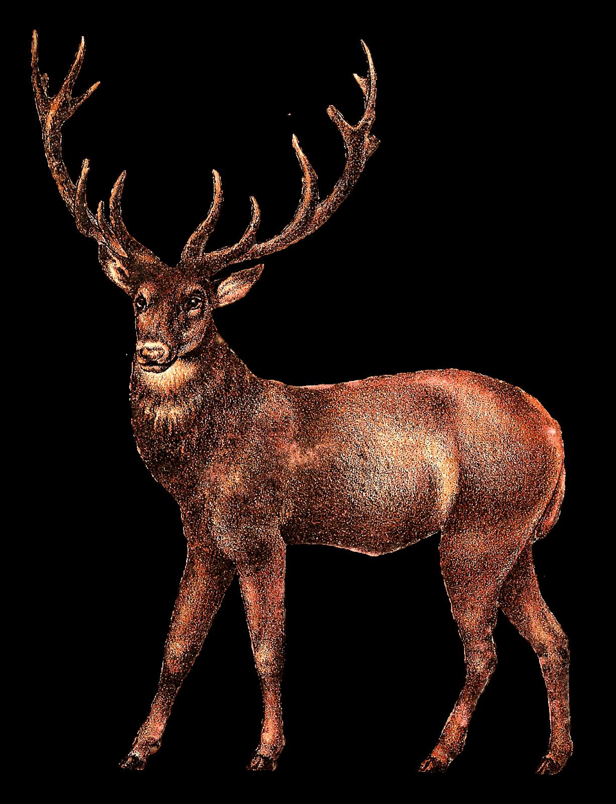 1225x1600 Antique Deer Image Transparent Png
