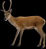 189x200 Deer Png Images Free Download, Deer Png