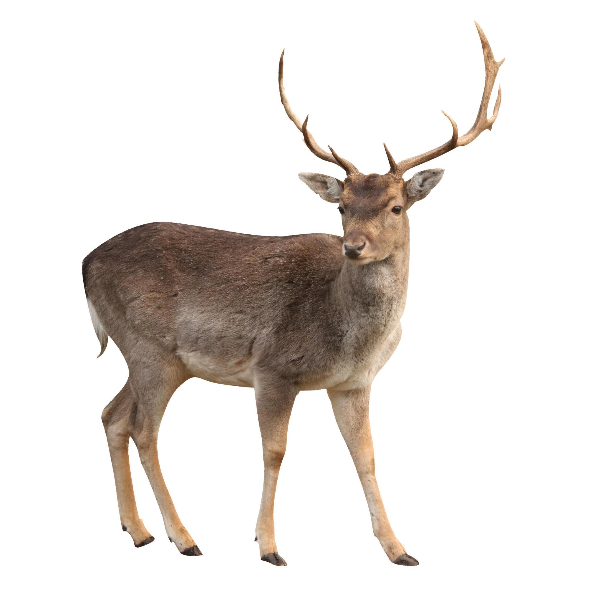 2048x2048 Deer Png