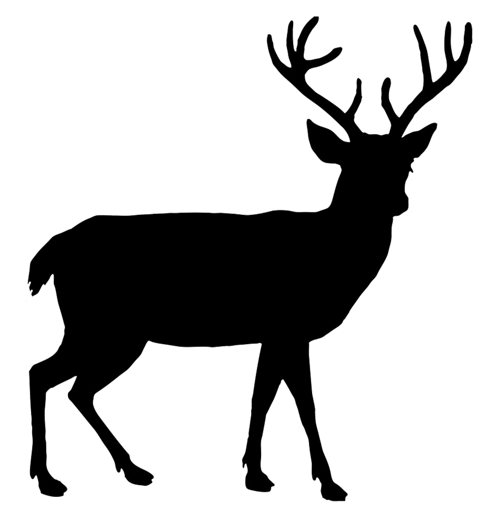 1004x1049 Download Deer Free Png Photo Images And Clipart Freepngimg