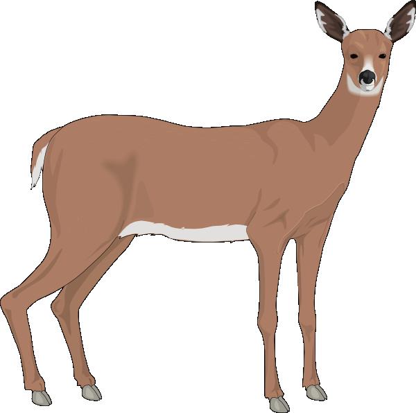 600x596 Staring Deer Png, Svg Clip Art For Web