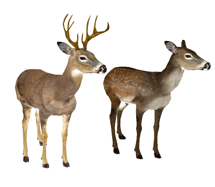 889x774 Whitetail Deer Head Png Png Mart