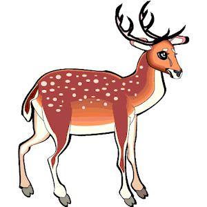 300x300 Deer
