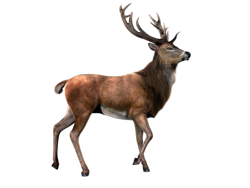 800x600 Deer Icon Clipart Web Icons Png