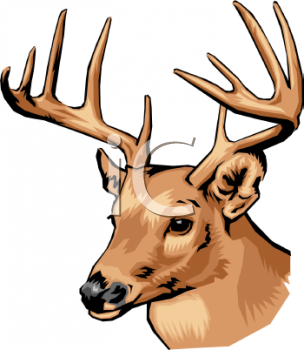 304x350 Deer Clipart Head