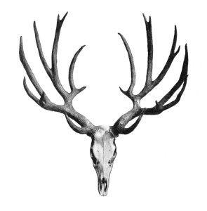 295x300 Antler Clipart Deer Antler