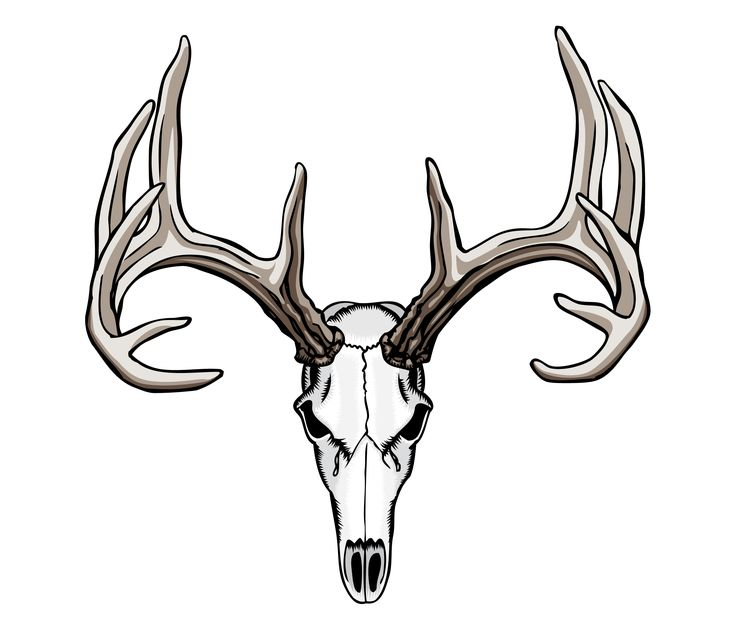 736x630 Drawn Skull Deer