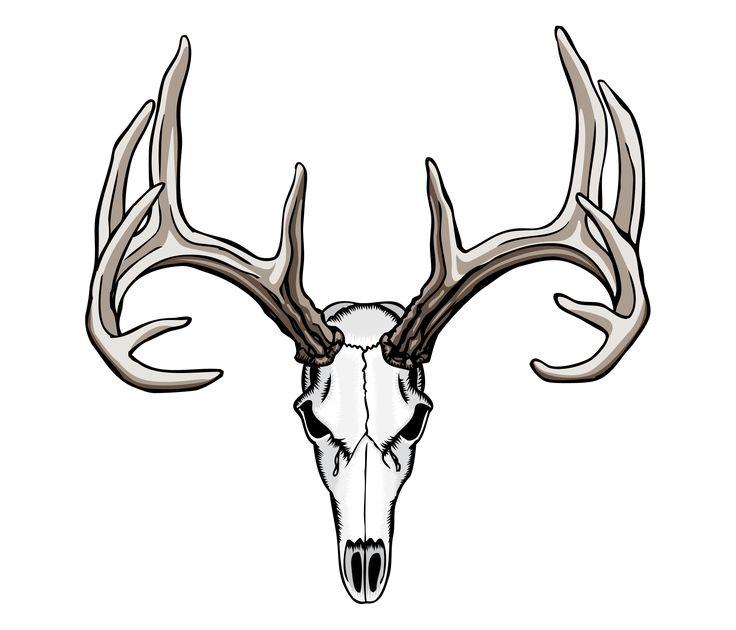 736x630 Drawn Skull Deer