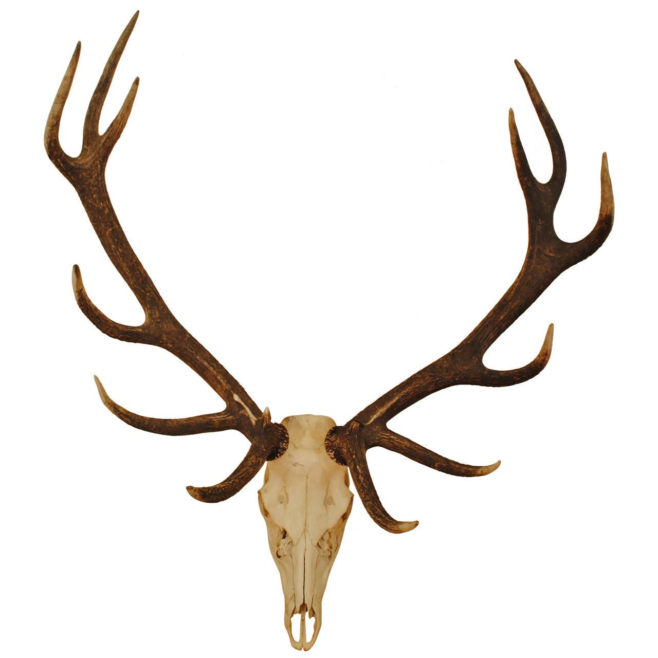 1280x1280 European Mount Deer Skull Clip Art Cliparts
