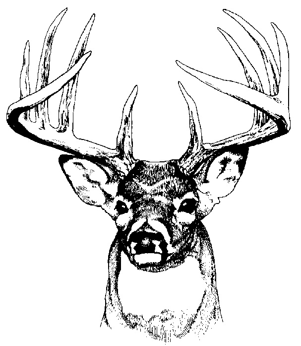 607x697 Best Deer Skull Clip Art