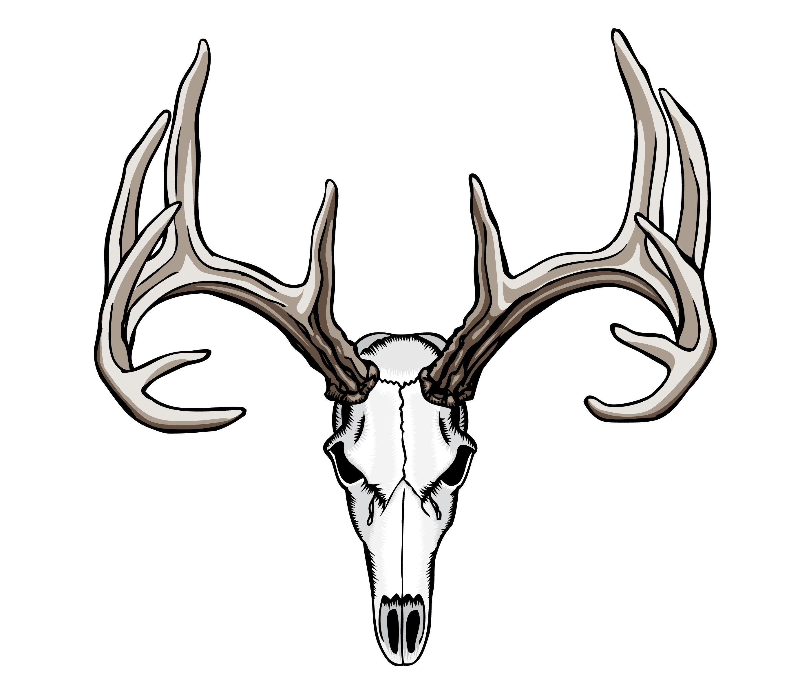 2800x2400 Deer Skull Drawing Clipart