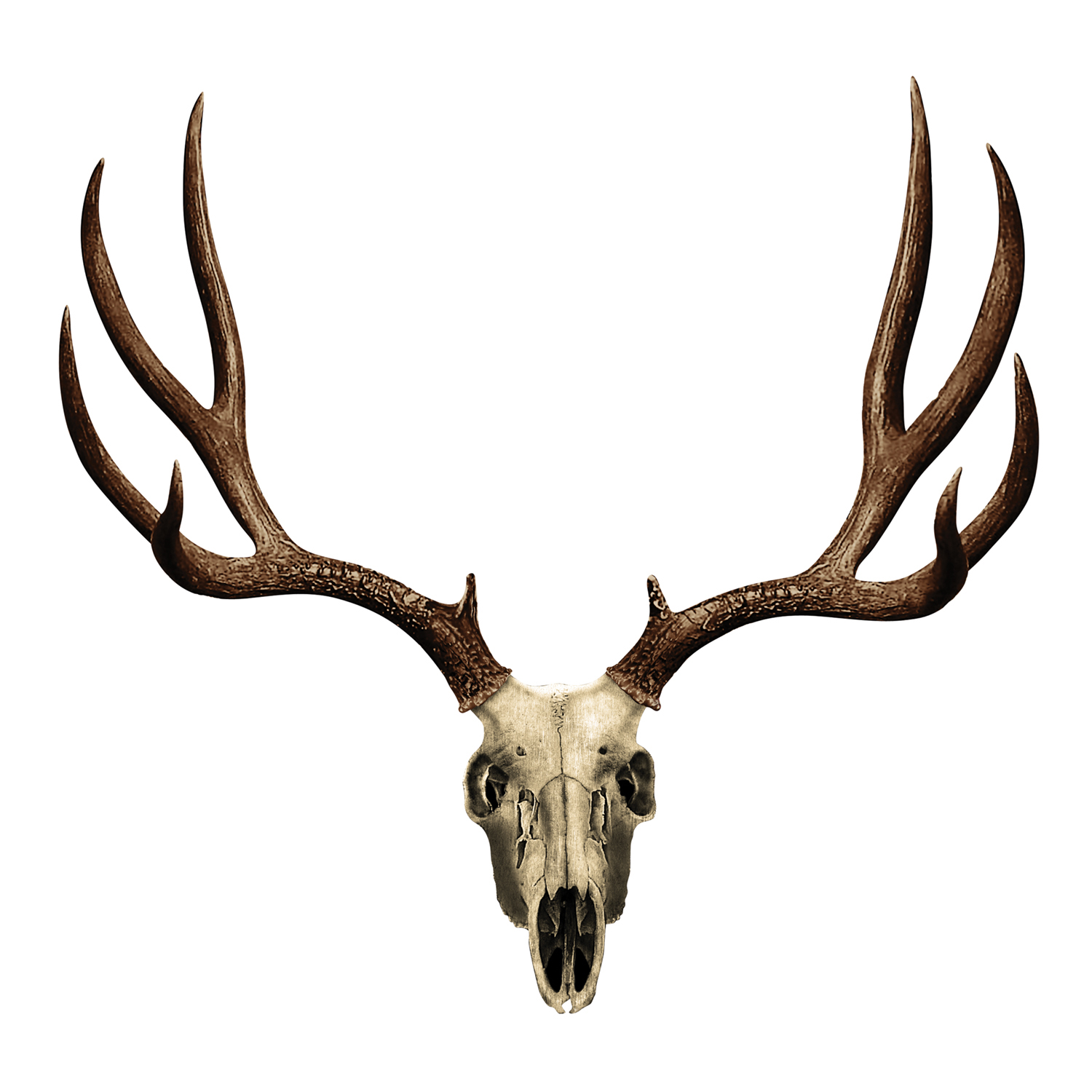 1500x1500 Mule Deer Skull Decal Mossy Oak Graphics