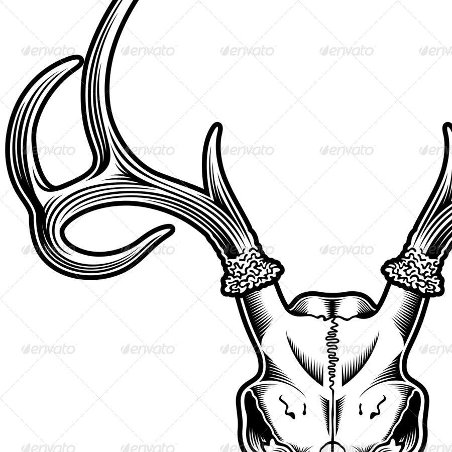 900x900 Deer Skull Vector By Vectorfreak Graphicriver