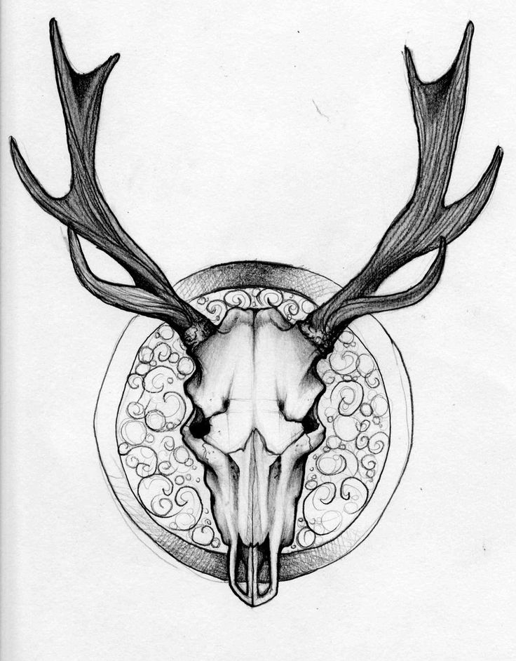 736x942 Drawn Buck Skull