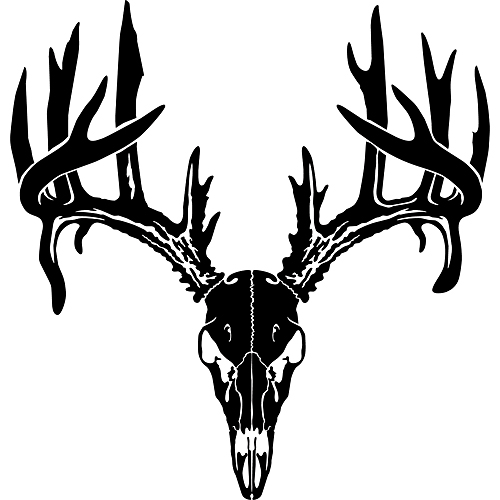 500x500 Skull Clipart Deer Head