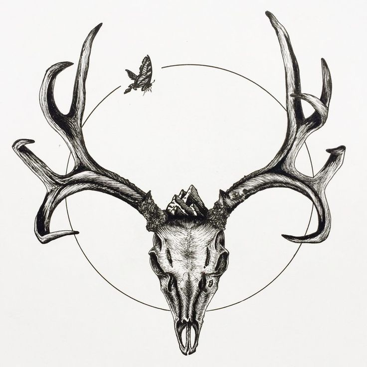 736x736 Best Deer Skeleton Ideas Irish Elk, Irish