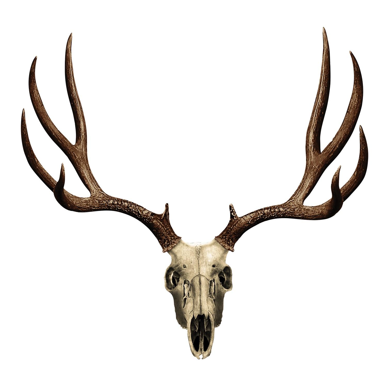 1500x1500 Skull Clipart Whitetail Deer